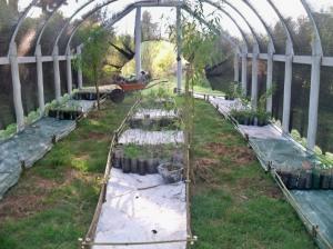 Instalacion y organizaciu00F3n de plantines y macetas-2